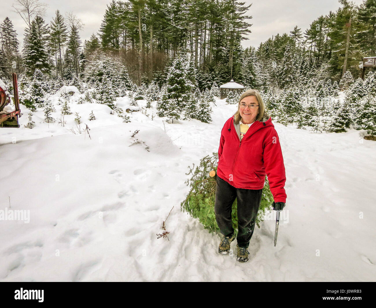 Christmas Tree Farm Snow Stock Photos & Christmas Tree Farm Snow ...