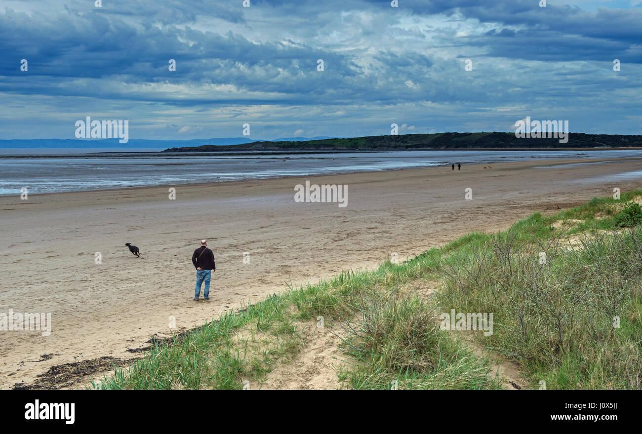 Dog Walking Beach Weston Super Mare