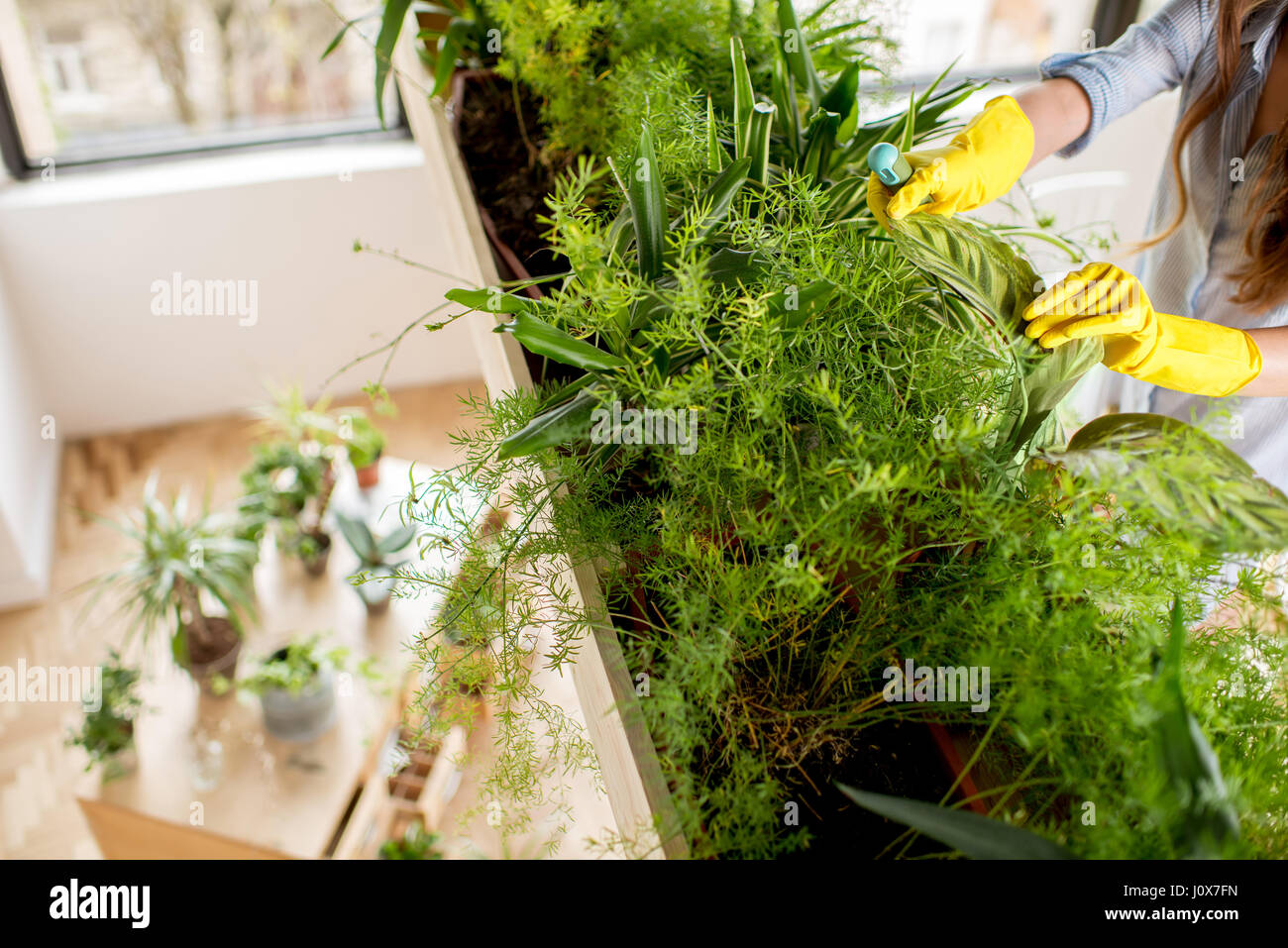 Taking care of plants Stock Photo