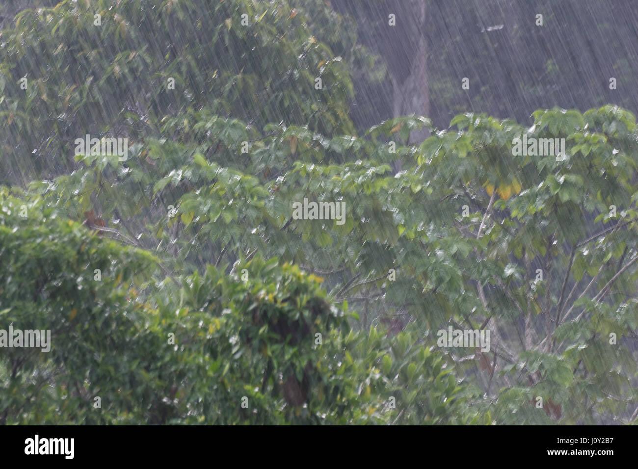 rain in yasuni national park, - Stock Image
