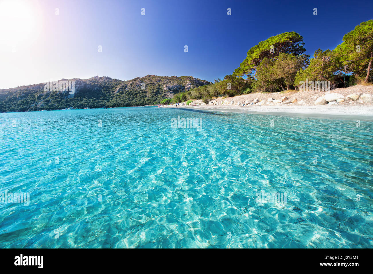 Santa Giulia sandy beach with pine trees and azure clear water, Corsica, France, Europe - Stock Image
