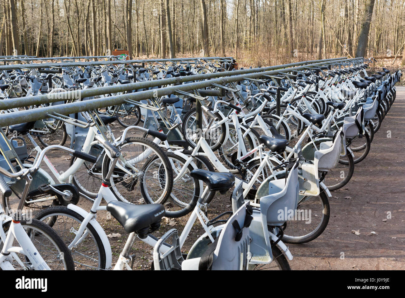 Bicycles for hire in the Hoge Veluwe National Park, Netherlands - Stock Image