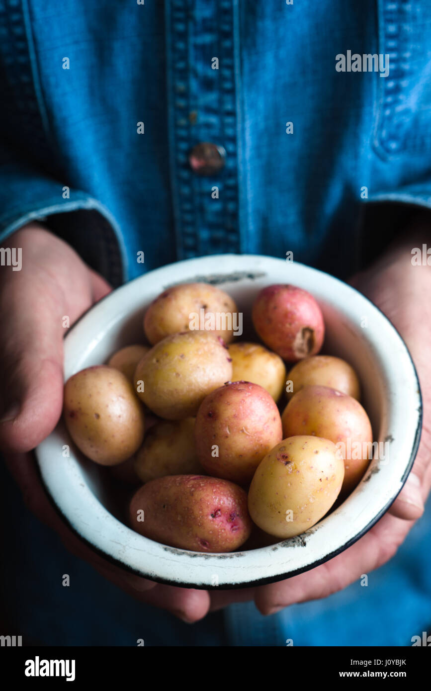 Metal bowl with raw potatoes in the hands - Stock Image