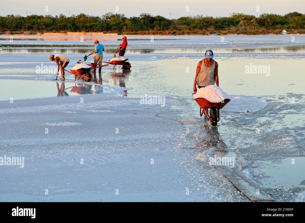Workers shoveling salt in wheelbarrow, raw salt production, saline at El Cujo, Yukatan, Mexico - Stock Image