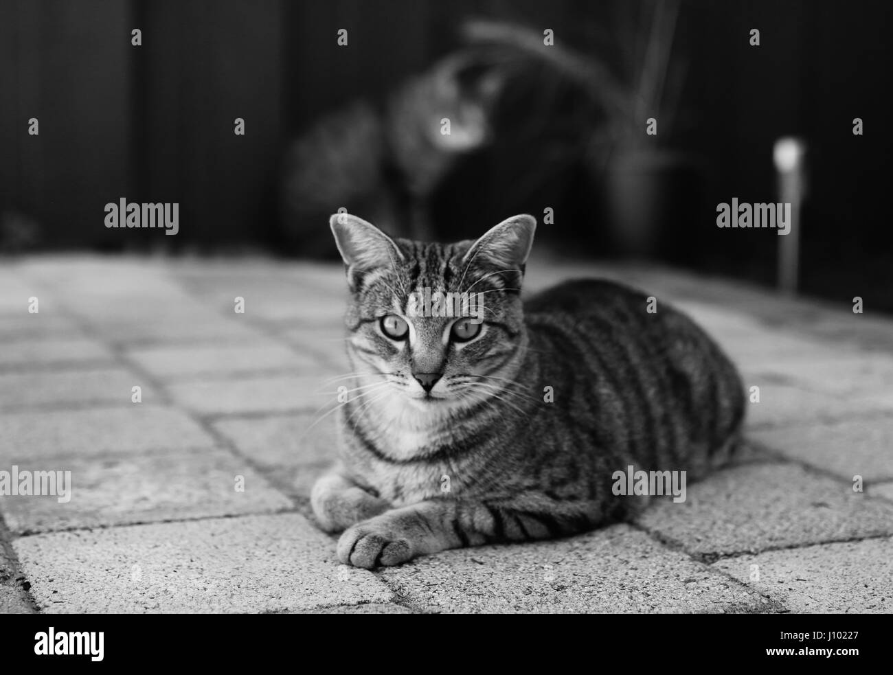 Twin cats living in South Fremantle, Australia Stock Photo