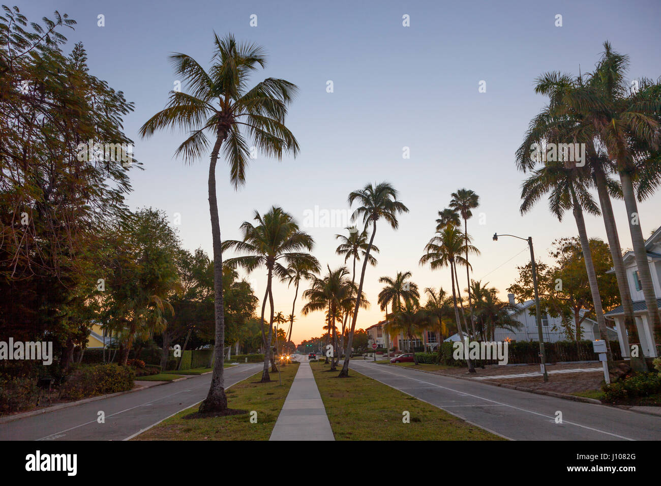 Coconut nut palm trees in a street in the city of Naples. Florida, United States - Stock Image
