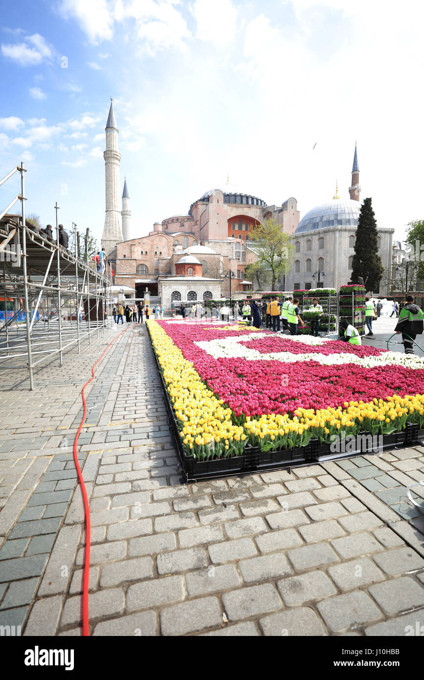 Istanbul, Turkey. 17th Apr, 2017. Organisers prepare for the annual Tulip Festival at Sultanahmet Square amid high - Stock Image