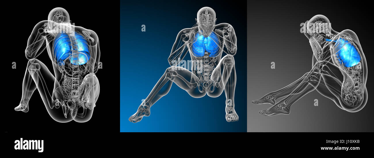 3d Rendering Medical Illustration Of The Human Respiratory System