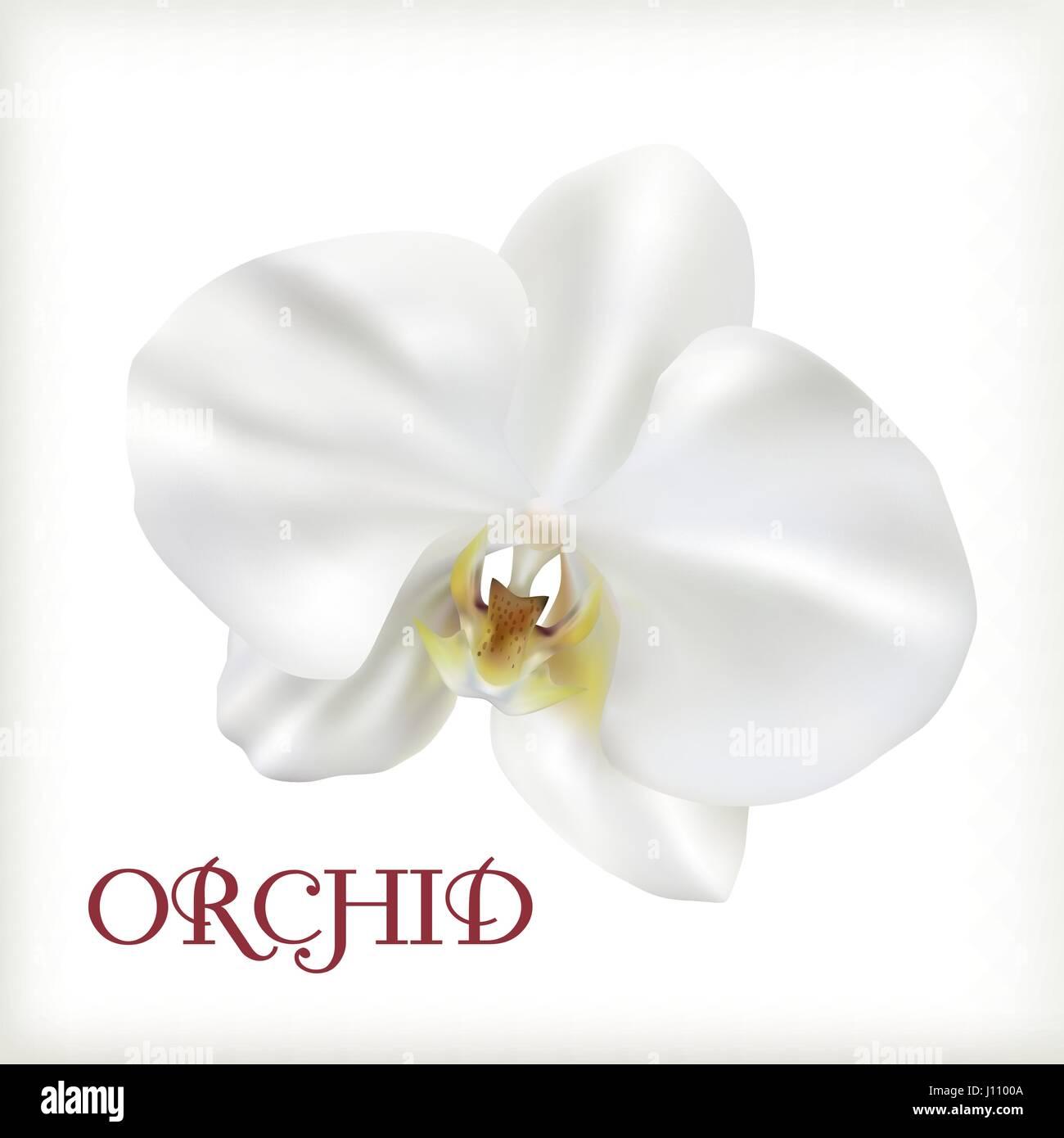 Flower symbol orchid plant stock photos flower symbol orchid plant white flower orchid stock image mightylinksfo
