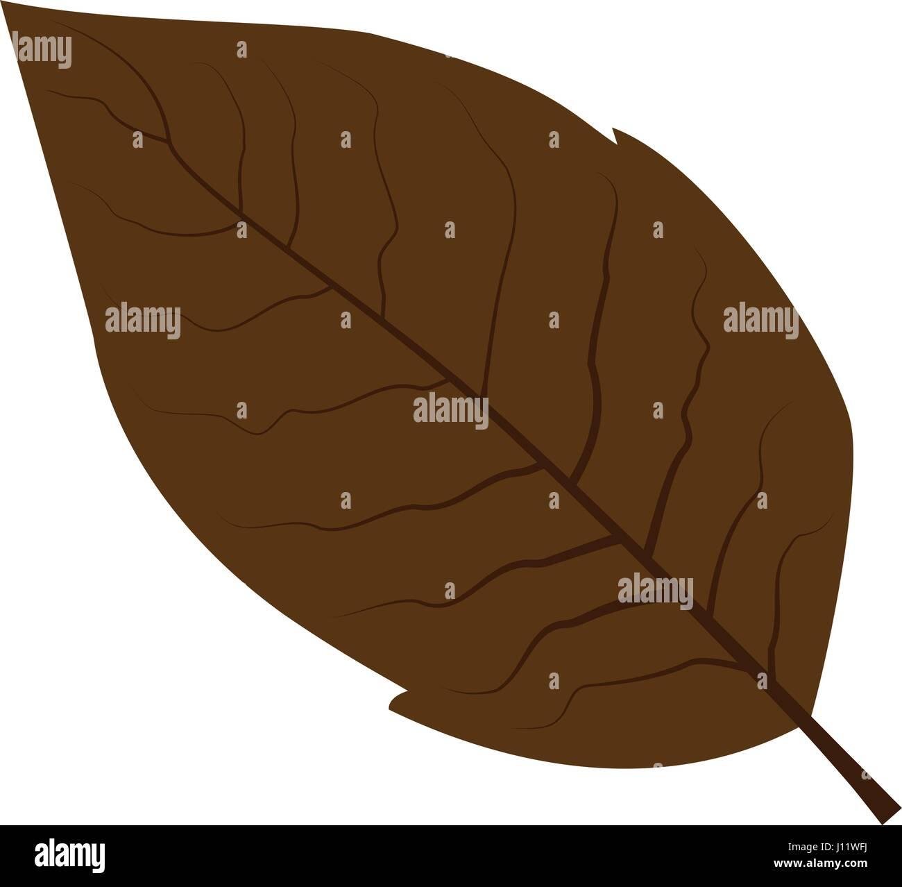 tobacco leaf vector illustration - Stock Vector