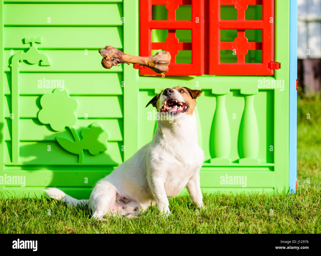Dog dreams about big treat bone sitting near house - Stock Image