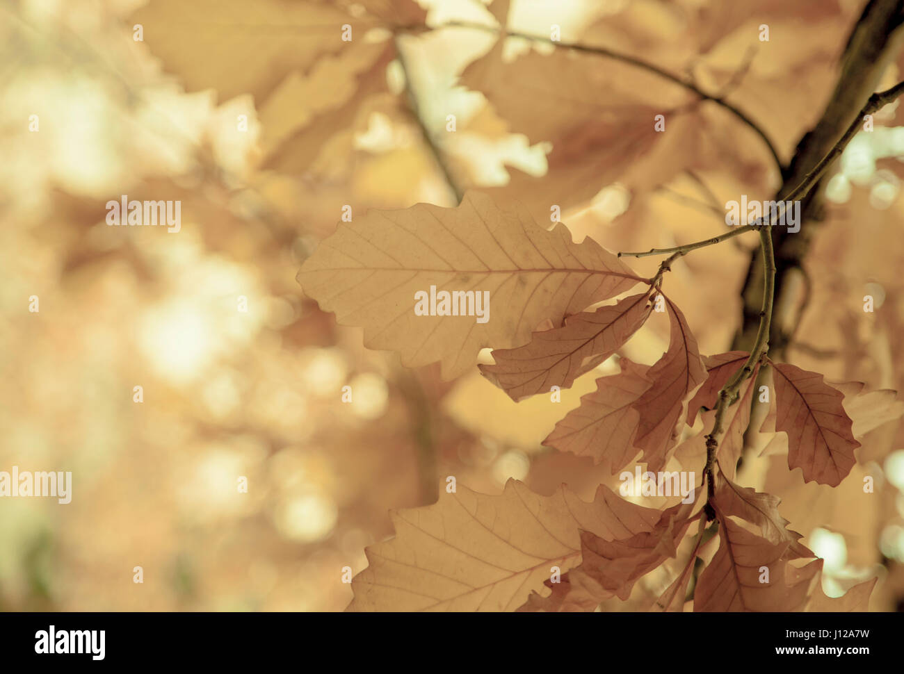 Leaves on a sunny morning, Fall season Stock Photo