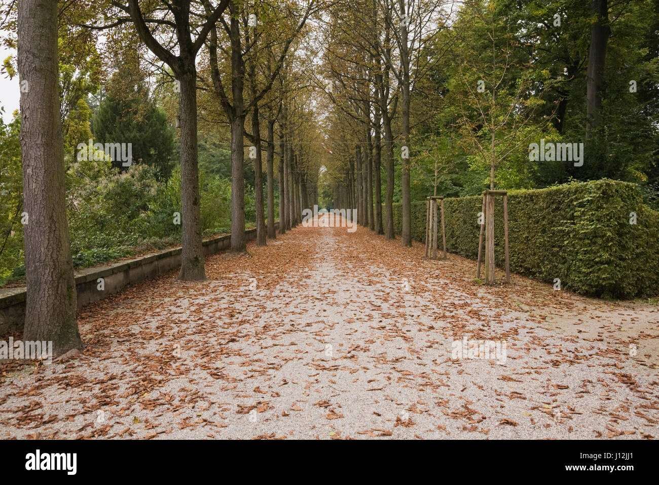 Gravel alley lined with rows of Castanea sativa - Chestnut trees in the Schwetzingen palace garden in late summer, - Stock Image