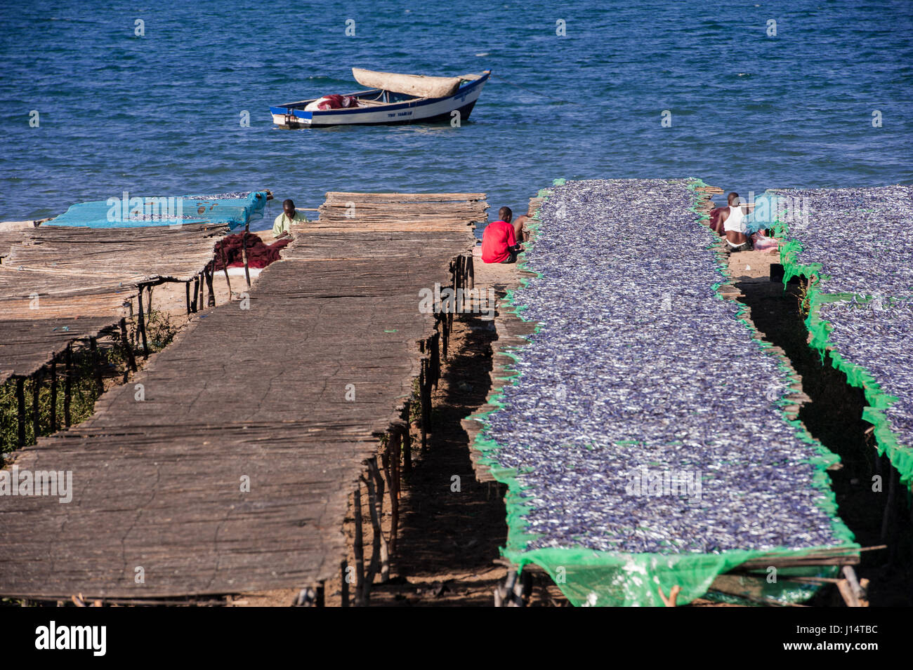 Fish drying on racks on the shore of Lake Malawi - Stock Image