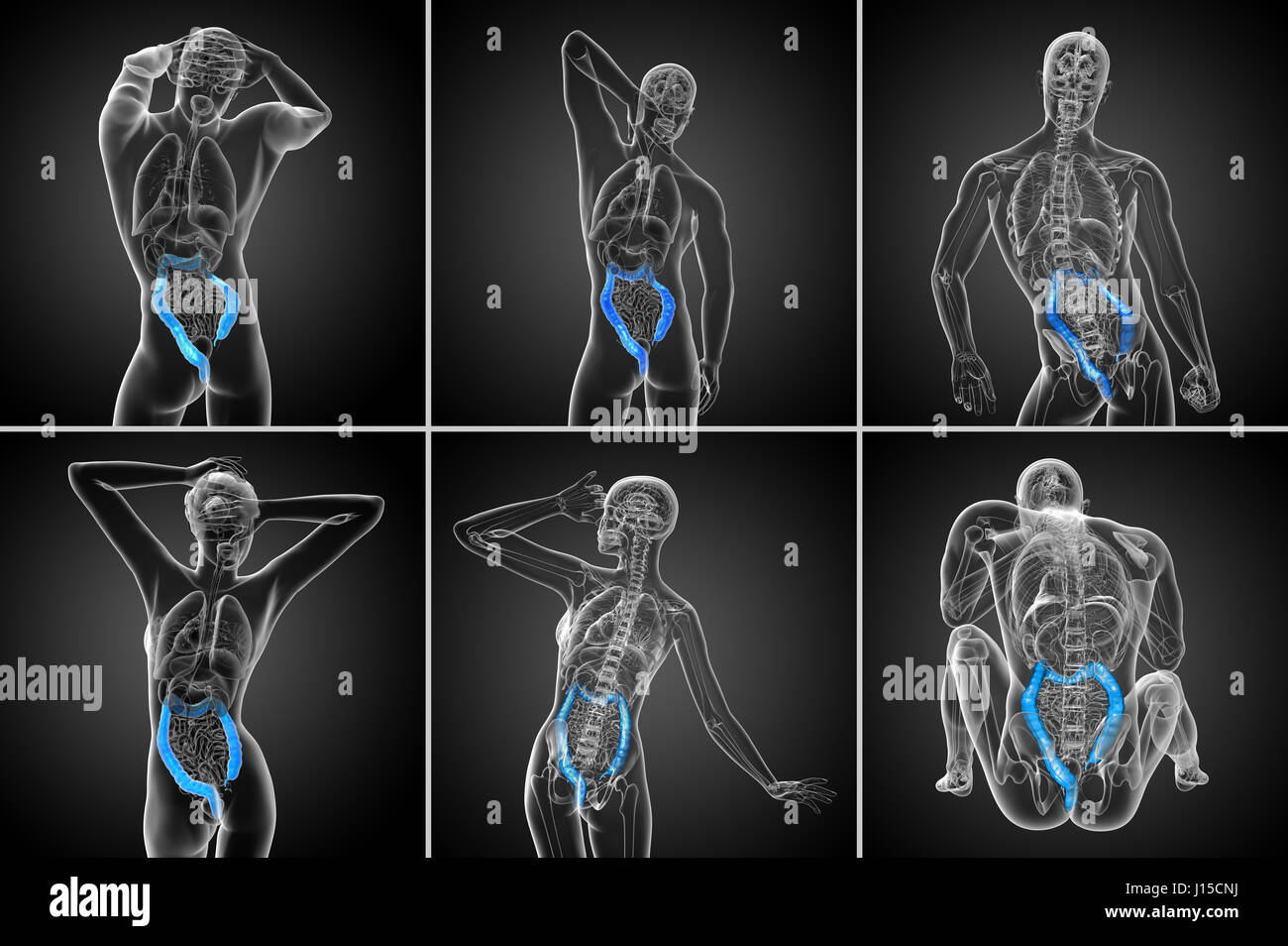 Large Intestine And Bladder Stock Photos & Large Intestine And ...