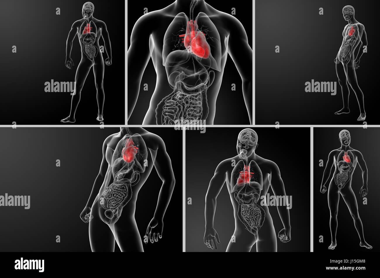 Großzügig Rumpfmuskeldiagramm Fotos - Menschliche Anatomie Bilder ...