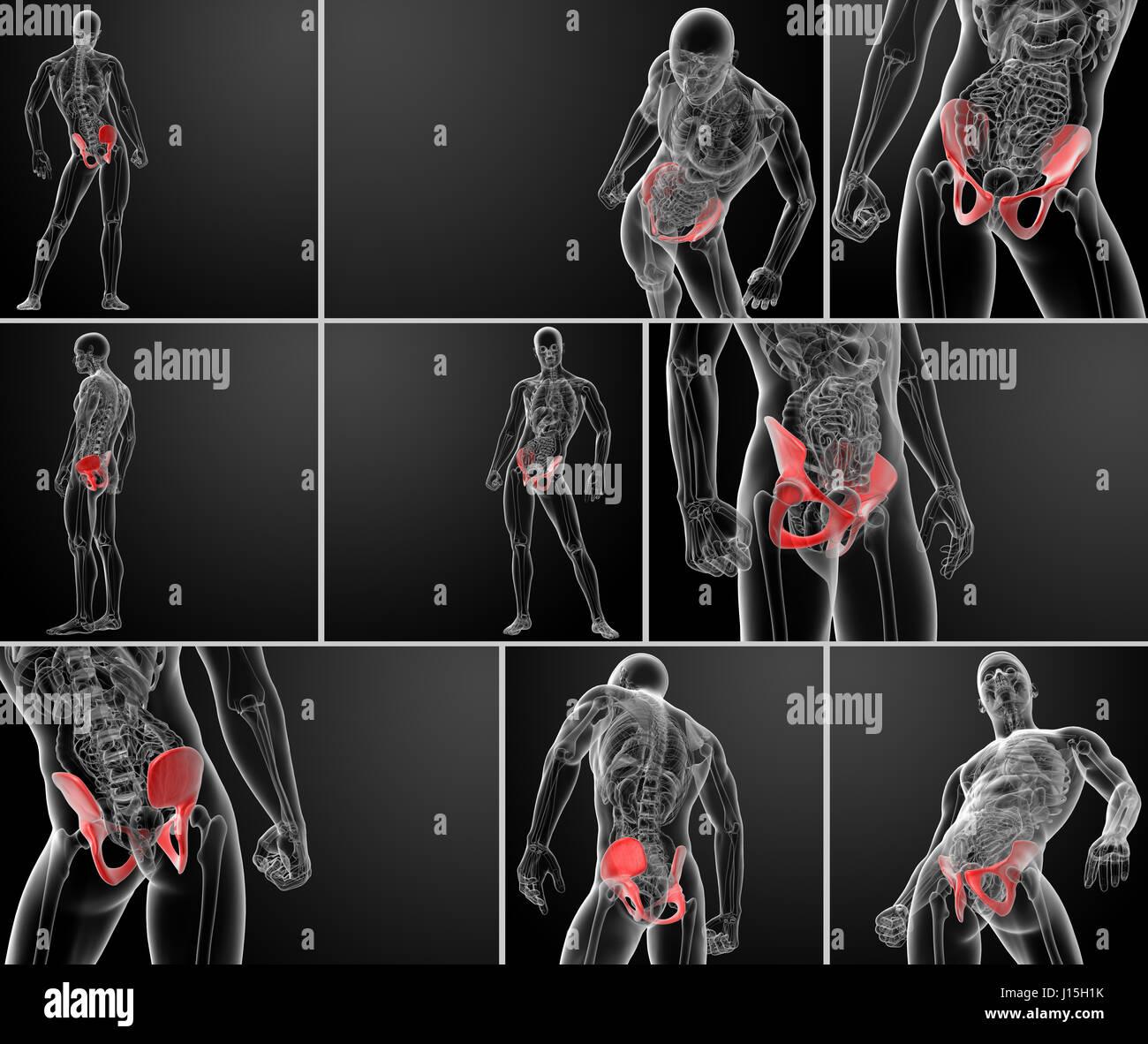 3d rendering pelvis under the X-rays - Stock Image