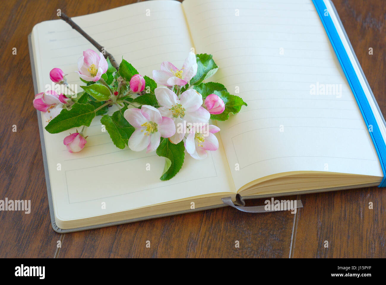 Flower spting blossom on blank diary page romantic lyrics notebook flower spting blossom on blank diary page romantic lyrics notebook greeting writing paper open notepaper book with copy space mightylinksfo