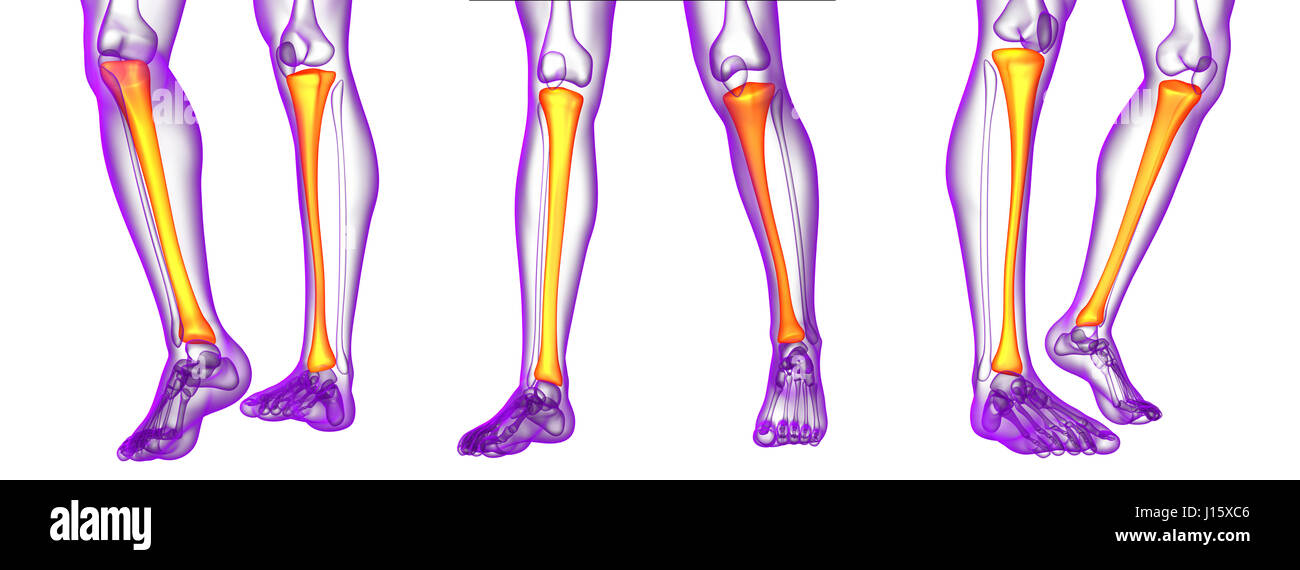 3d Rendering Medical Illustration Of The Tibia Bone Stock Photo