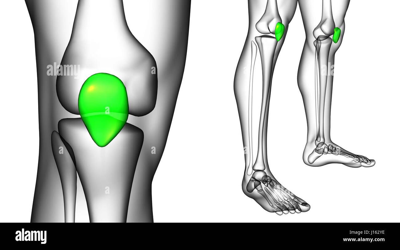 3d rendering medical illustration of the patella bone Stock Photo ...