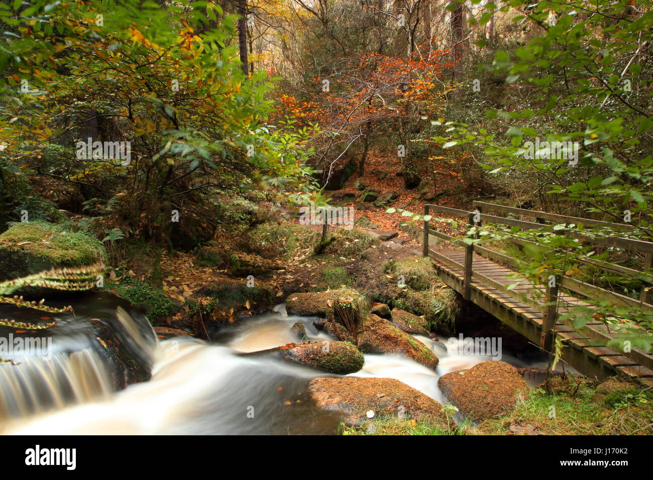 Stunning autumn foliage in woodland in the scenic Wyming Brook nature reserve in Sheffield city's Peak District, - Stock Image