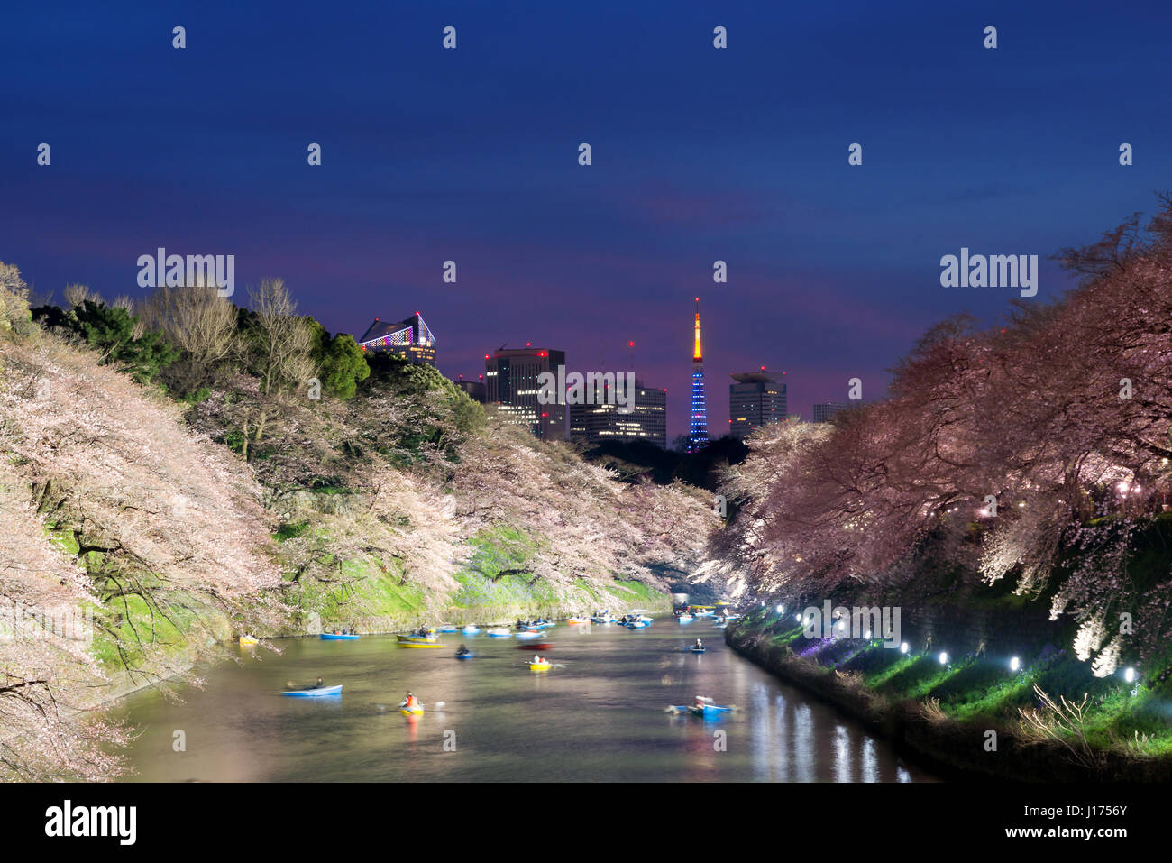 Night view of massive cherry blossoming with Tokyo tower as background. Photoed at Chidorigafuchi, Tokyo, Japan. Stock Photo