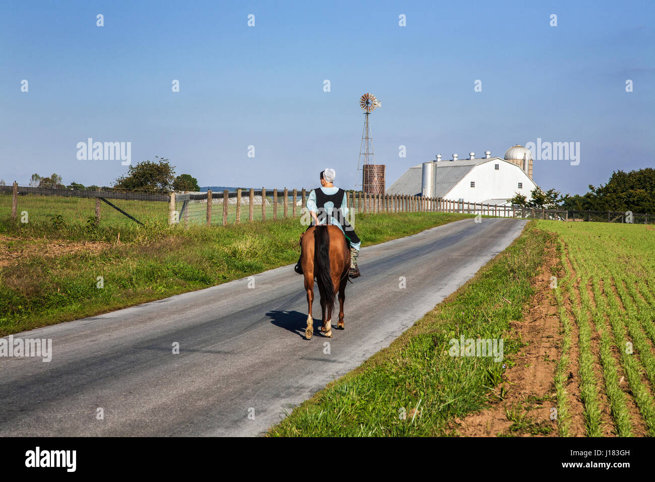 Amish young lady riding a horse on a rural Amish farm country road with a white barn, Lancaster County, rural Pennsylvania, Stock Photo