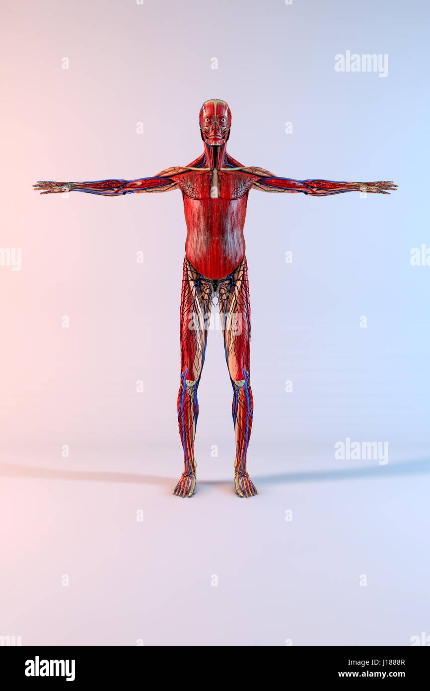 Complete human body with opened arms on white background Stock Photo ...