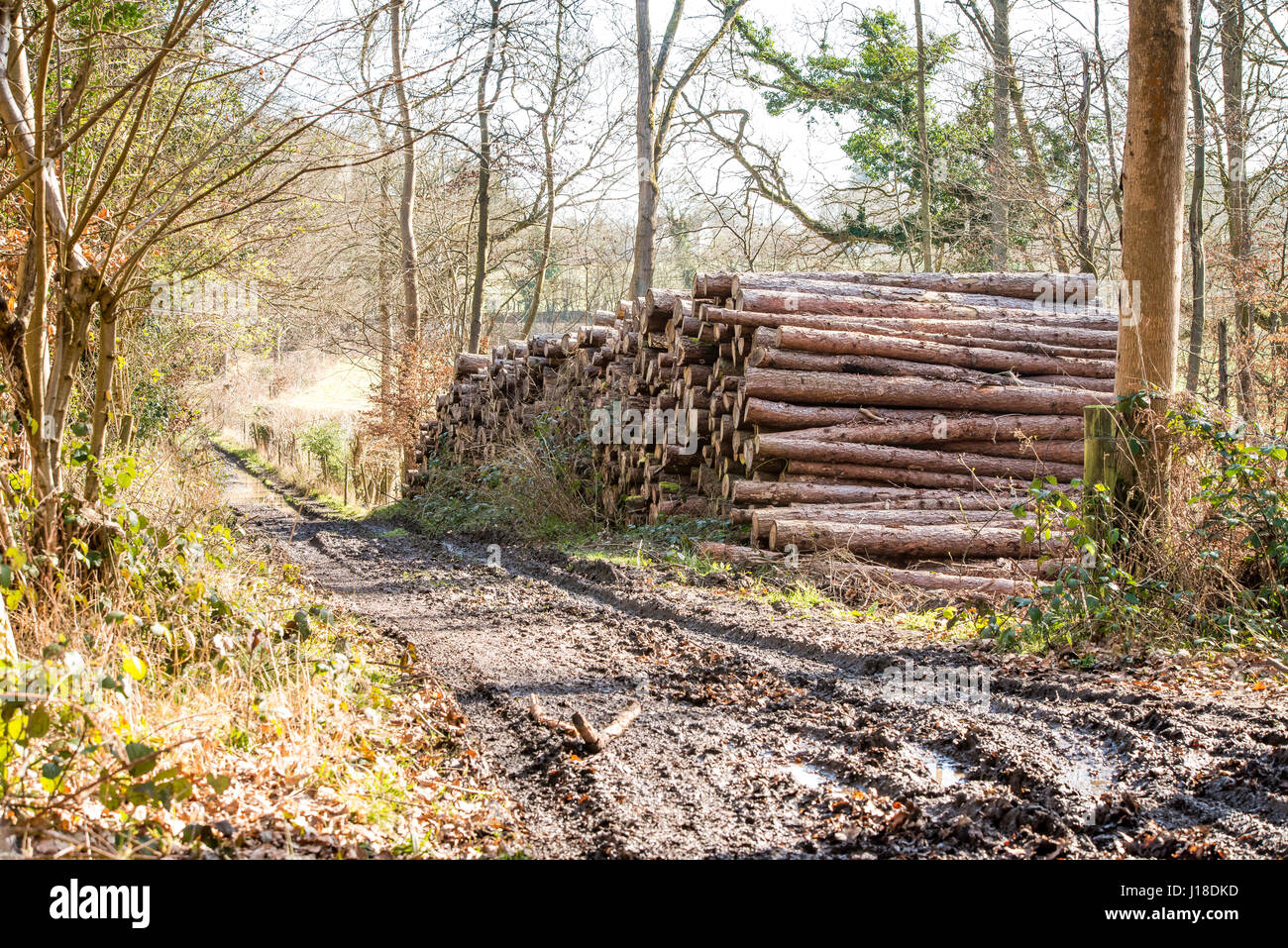 A stack of softwwod lumber awaits collection - Stock Image