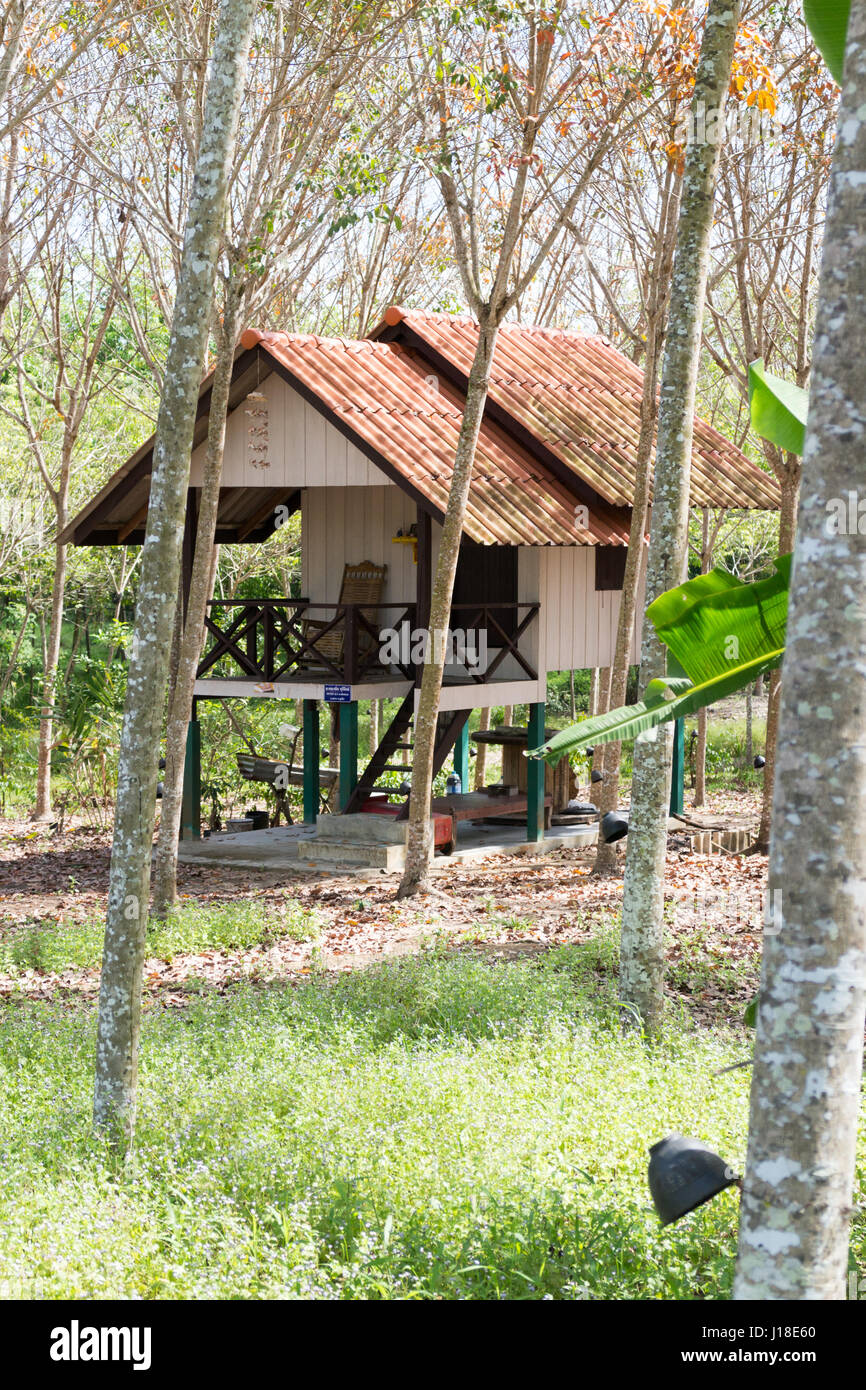 House of a rubber tree plantation worker, Phuket, Thailand - Stock Image