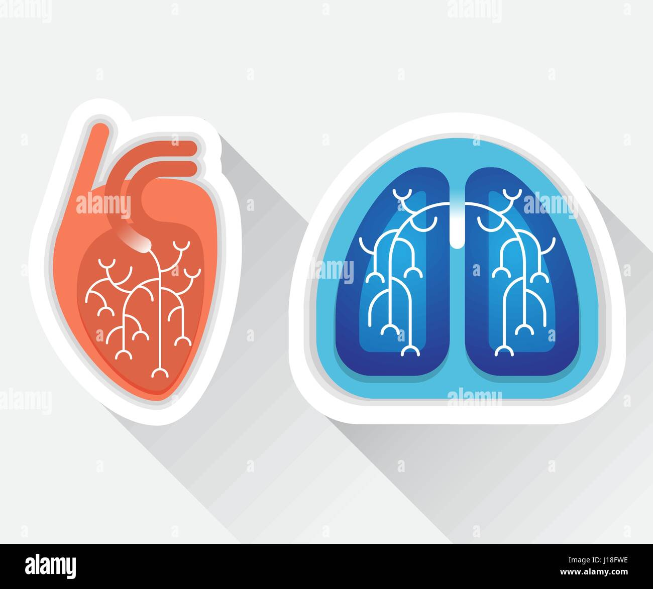Human lungs and heart flat illustration - Stock Vector
