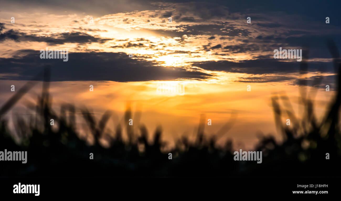 Lakewood Park Sunset - Stock Image