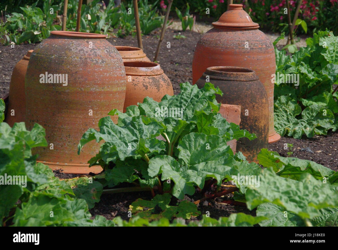 Rhubarb Forcing Pots in a Kitchen Garden - Stock Image
