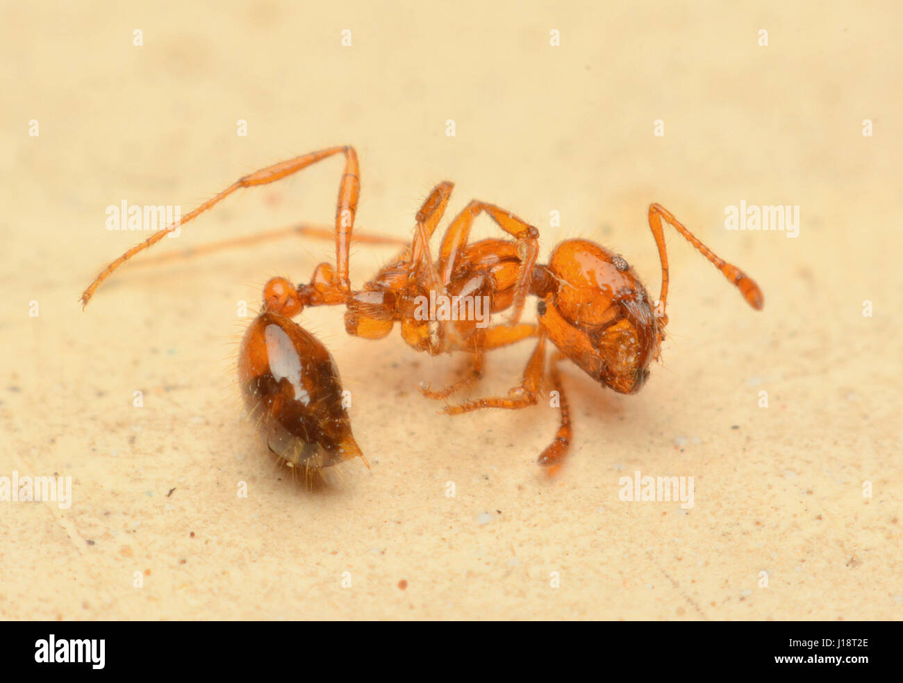 ant. Not revive dead - Stock Image