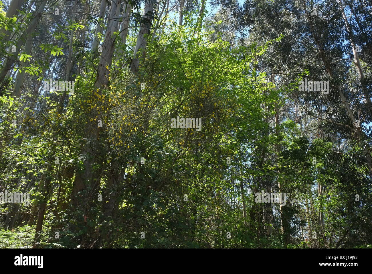 Lousa Forest in Coimbra, Portugal - Stock Image