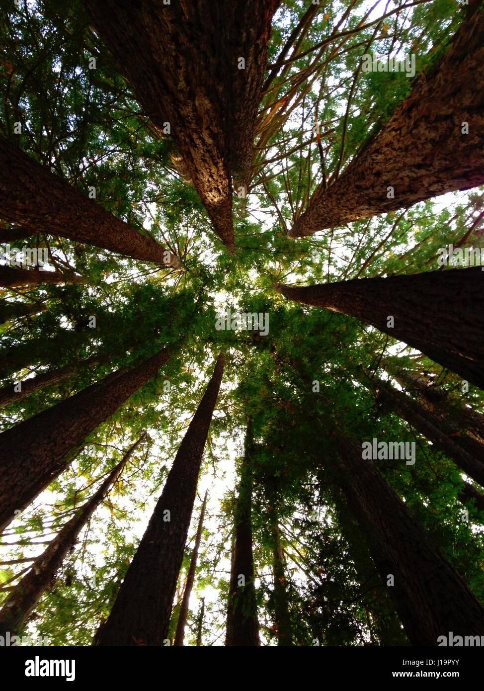 Tree Circle - Stock Image