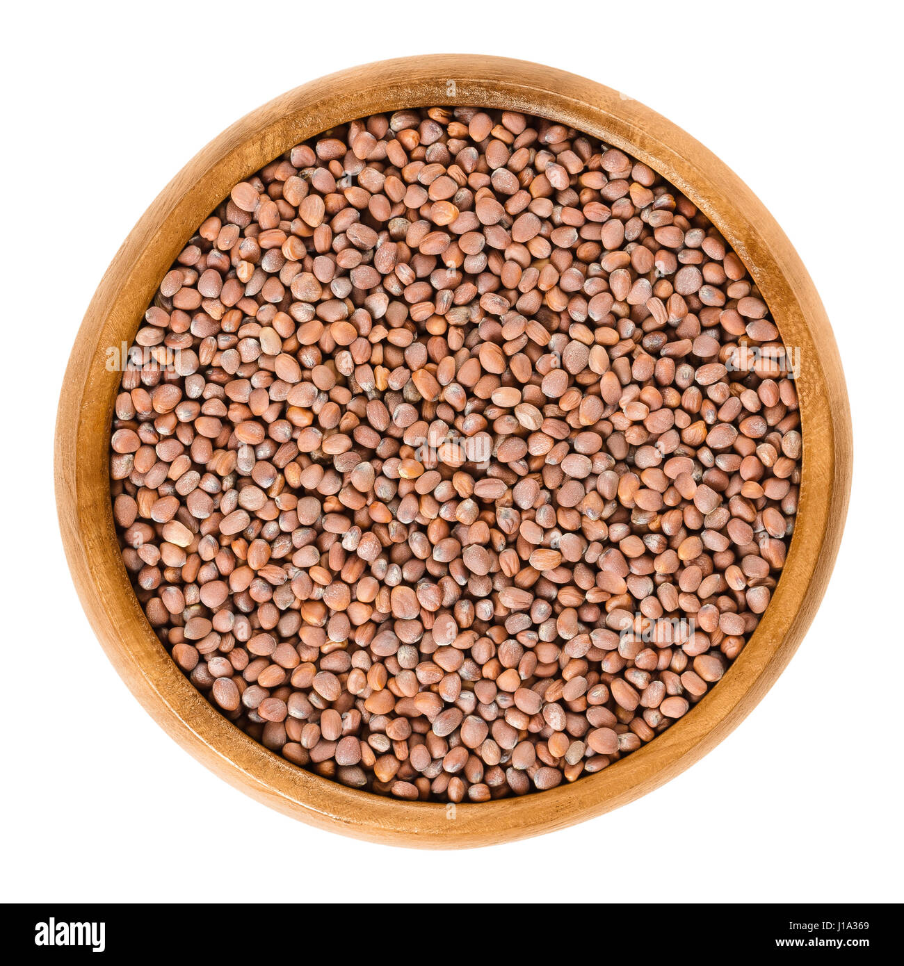 Radish seeds in wooden bowl. Raphanus sativus, an edible root vegetable. Seeds for sprouting with water in a jar - Stock Image