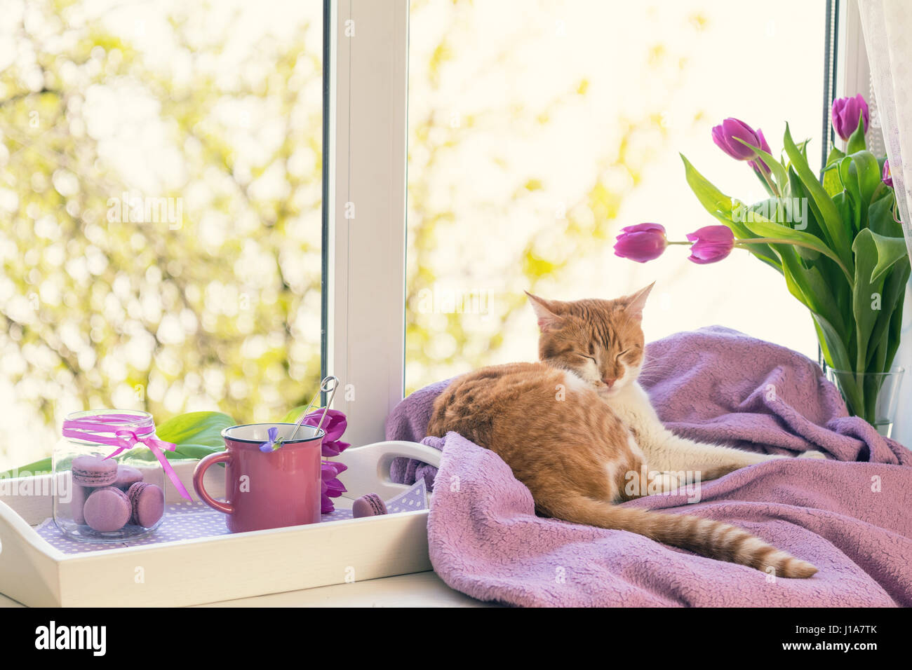 Cozy home concept. Purple fresh tulips in glass vase. Macaroons in ...