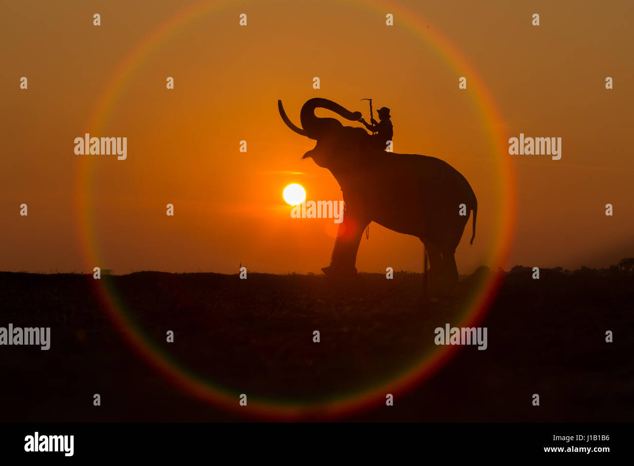 Silhouette elephant in the circle of the sun. It is a way of life in Thailand. - Stock Image