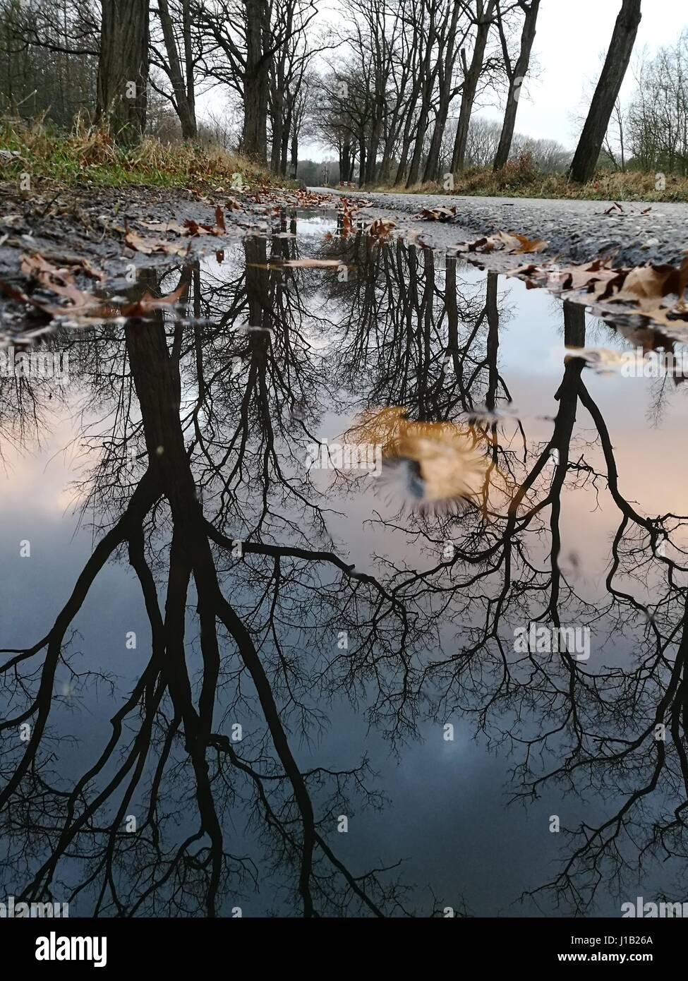 puddle reflexion - Stock Image