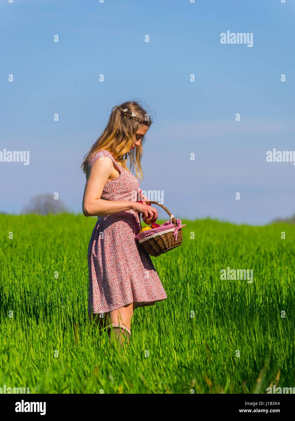 Country-girl hold picking up apple from small basket side-view three-quarter length looking down spontaneous farm - Stock Image