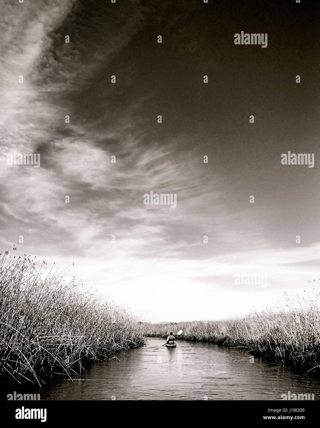 marsh - Stock Image
