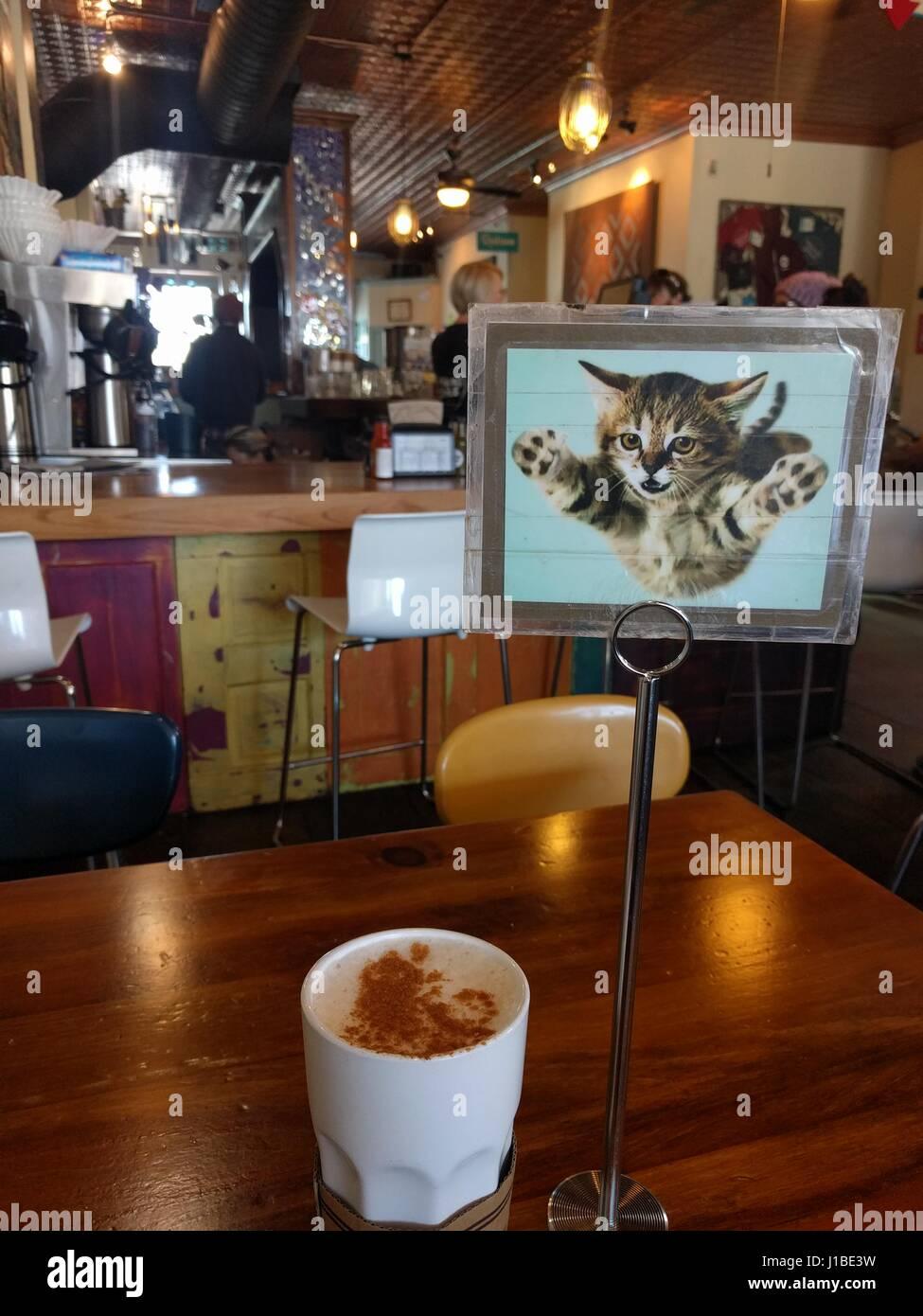 Coffee cat Stock Photo