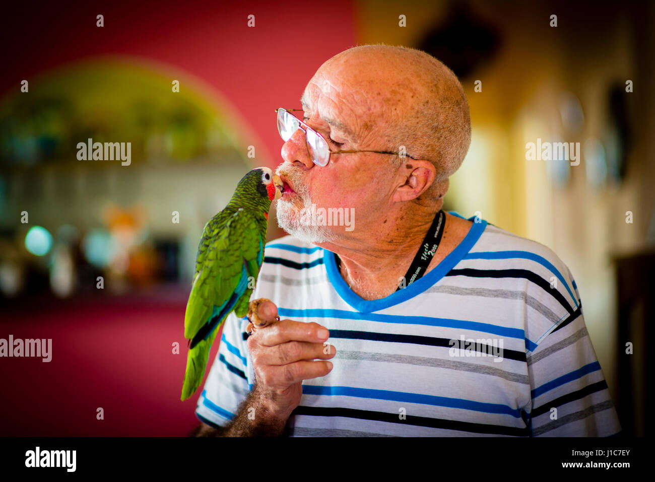 An old man and his green Macaw in Havana Cuba - Stock Image