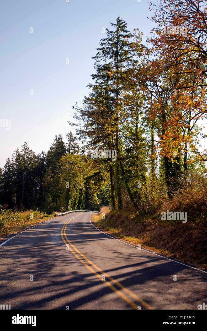 Curving road with road markings with autumn colorful trees on the side of the road on both sides of the road. The - Stock Image