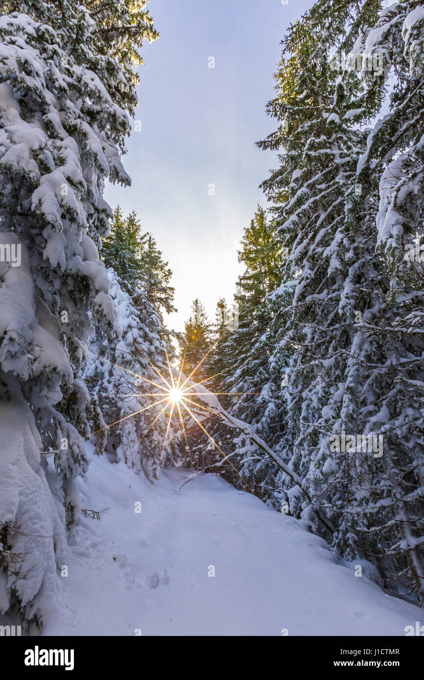 The sun shines her beams through snow covered trees and over a clearing in the forest. - Stock Image