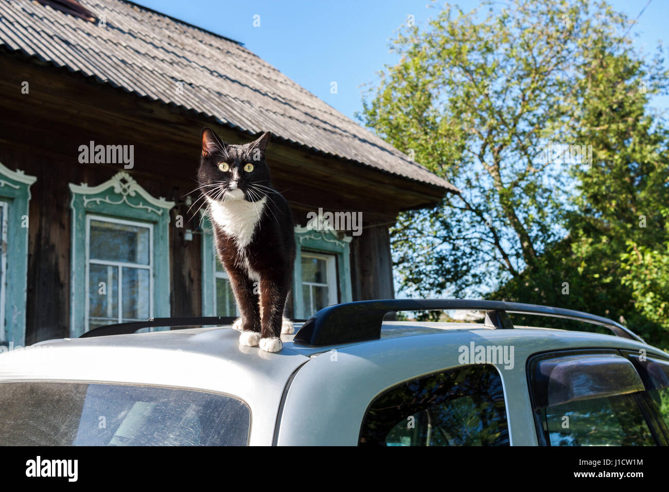 Black and white cat stands on roof of car near village house in summer. - Stock Image