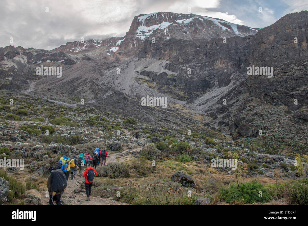 Kilimanjaro scenery - Stock Image