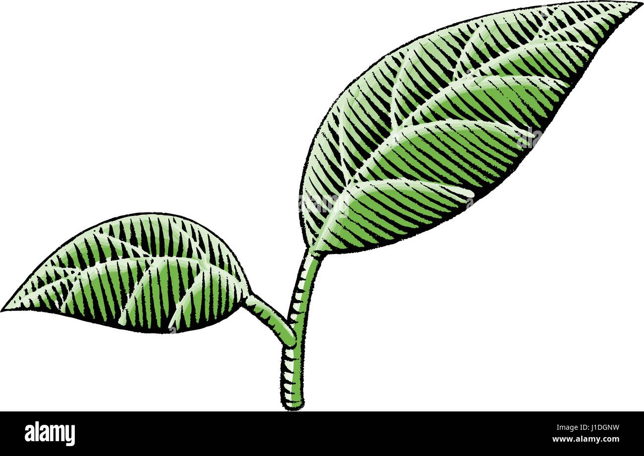 Vector Illustration of a Scratchboard Style Ink and Watercolor Drawing of Leaves - Stock Vector