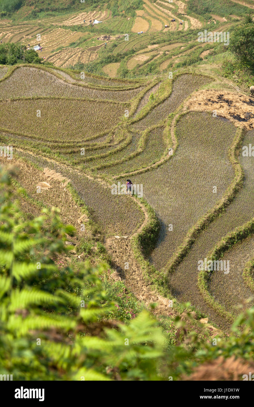 A birds eye view of the rice terraces of Sa Pa (Sapa) as a lone farmer carries out his work. Northern Vietnam, southeast - Stock Image